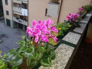 port vasi da balcone o terrazzo